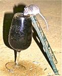 Ratón en la Bodega de Gonzalez Byass.