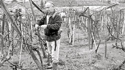 José D. TXABARRI trabaja la viña con interés y conocimiento.