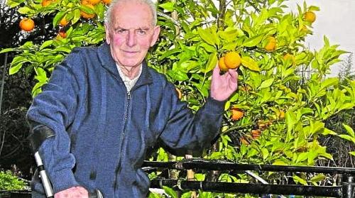 José posa junto a uno de los naranjos que se alza repleto de fruta en los viveros de Gatika.