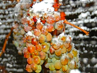uvas congeladas