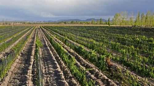 vinos-2254588w620